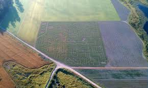 Bobs Pumpkin Patch Snohomish by Bobs Corn Maze Seattle A List