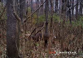 Hunting Late Season Staging Areas