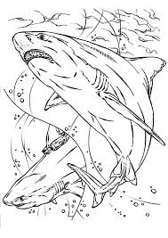 Shark Jaws Colouring Page For Kids Shark Jaws Colouring Page For