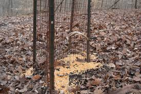 deer antler shed trap 53 images detail how to shed antler