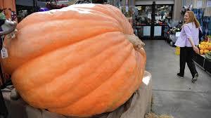 Worlds Heaviest Pumpkin Pie by Dan Schantz Greenhouse In Allentown Has 1 405 Pound Pumpkin On