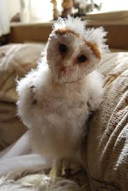 BARN OWL BABY STOCK 2 By Theshelfs On DeviantArt Barn Owl Focus On Cservation Best 25 Baby Ideas On Pinterest Beautiful Owls Barn Steal The Show As Day Turns To Night At Heartwood Family Ties Owl Chicks Let Their Hungry Siblings Eat First The Perch Uncommon Banchi Baby Coastal Home Giftware From Horizon Stock Image Image Of Small Young Looking 3249391 You Know Birdnote Banding By Alex Lamoreaux Nemesis Bird