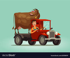 100 Cow Truck Happy Farmer And Cow Rides On Truck Farming Farm Vector Image