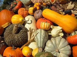 Siegels Pumpkin Farm by Home