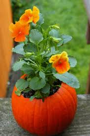 Foam Pumpkins Bulk by 21 Best Fall Curb Appeal Images On Pinterest Fall Home And Autumn