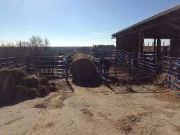 Prepare For Calving Season - Eden Shale Farm Around The Farm Scissors Creek Cattle Company The Beutler Family Bench Design Hay Barn Plans Shed Heifer Development Way View Onduty Horse Csavvycom We Know Working Horses Katefairlie Kate Fairlie Kims County Line Cribs Aka Sheds Enduragate Setup Demstration For Calving Youtube Portable Calving Beef Facilities Pinterest Barn 332014 Calving2014 January 2014 Life On A Bc Ranch Slate Architecture Boots Heels Renovated Area