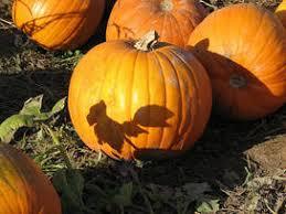 Pumpkin Patch Fresno Clovis by Fun Things To Do In Fresno Ca With Kids Trekaroo