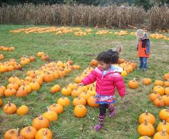 Snohomish County Pumpkin Patches by Pumpkin Patches And Corn Mazes For Puget Sound Area