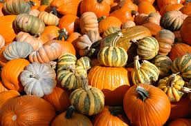 Where Did Pumpkin Patch Originate by Pumpkin Patches A Few Things You Might Not Know About Halloween