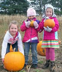 Motley Pumpkin Patch by Fun For All Ages Found At Pumpkin Patch North Of Royalton Local