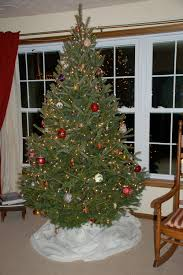Fraser Fir Christmas Trees Kent by December 2011 Roadkill Crossing