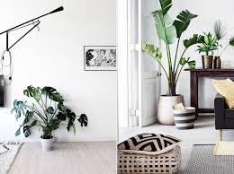 große zimmerpflanzen sorgen für ein jungle feeling in der
