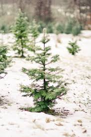Ceramic Christmas Tree Bulbs Canada by Shopper U0027s Diary A Christmas Tree Farm In Maine Gardenista
