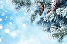Wallpaper New Year Nature Christmas Tree Snow Branches Pine Cone