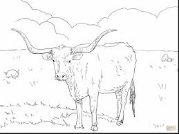 Magnificent Texas Longhorn Cows Coloring Pages With Cow Page And Printable