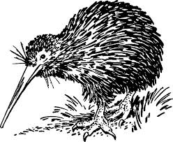 Hungry Kiwi Bird Looking For Food Coloring Pages