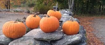 Paleo Pumpkin Custard Whole30 by 10 Whole 30 Pumpkin Recipes Sustainable Dish