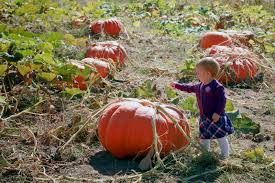 When Does Carmichaels Pumpkin Patch Open by Kennedy Photography