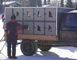 2011 Iditarod Photos - Sled Dogs And Trucks | Living In Alaska ... Alberta Spca Opens Invesgation After Photos Show Dogs Above Dog Truck Stock Photos Royalty Free Images Travel Hammock Back Seat Cover Protect Your Car Or Is It Legal In Washington To Drive With Your Dog Loose Bed Harness Korrectkritterscom Angry Truck Driver Stock Image Image Of Commuting 35342397 Scania T Rjl Mad Dog Truck Skin 130 Euro Simulator 2 Mods Found Wearing A Jacket What Was The Pocket Led Traveling Pet This Holiday Part 4 Mckinney Animal Tree Roots Tampa Food Trucks Roaming Hunger Facilities Great Of Cute Dogs