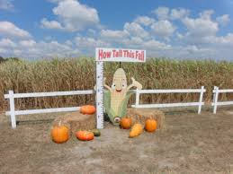 Pumpkin Patch Near Killeen Tx by The Robinson Family Farm Temple Having Fun In The Texas Sun