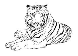 Coloriage Zoo Singe Tigre Sur Hugolescargotcom