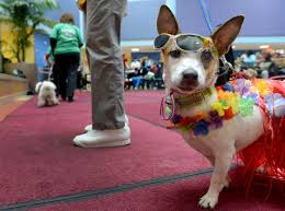 Little Five Points Halloween Parade Start Time by Therapy Animals Are Everywhere But Proof That They Help Is Not