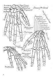 Welcome To Dover Publications Drawing Hands With Over 1000 Illustrations ExercisesDrawing HandsAnatomy ReferenceColoring BookFree