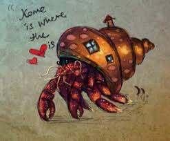 Do Hermit Crabs Shed Their Whole Body by Hermit Crab Care Archives The Crabstreet Journal