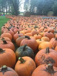 Pumpkin Patch Near Green Bay Wi by Blaser U0027s Acres Home Facebook