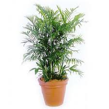 pflanzenübersicht feng shui raum