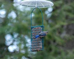 Pennsylvania Among The Leaders As Great Backyard Bird Count ... Some Ways To Keep Our Backyard Birds Healthy Birds In The These Upcycled Diy Bird Feeders Are Perfect Addition Your Two American Goldfinches Perch On A Bird Feeder Eating Top 10 Backyard Feeding Mistakes Feeder Young Blue Jay First Time Youtube With Stock Photo Image 15090788 Birdfeeding 101 Lover 6 Tips For Heritage Farm Gardenlong Food Haing From A Tree Gallery13 At Chickadee Gardens Visitors North Andover Ma