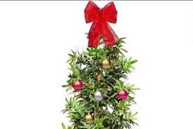 Watch Marijuana Leaf Christmas Tree Pulled From Walmart