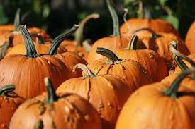 Coconut Grove Pumpkin Patch by Weekend Planner Seafood Festival Art Fair And More Nbc 6 South