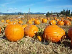 Greenbluff Pumpkin Patch Spokane Wa Hours by Spokane Wa Photography Pinterest