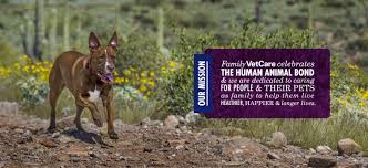 Family VetCare Serving Mesa, Chandler, And Phoenix, Arizona 58 Off Valley Vet Coupon Promo Codes Retailmenotcom Oukasinfo Pet Supply Store Sckton Manteca Ca Carters Mart Welcome To Benjipet Sugar House Veterinary Hospital Vetenarian In Salt Lake City Ut Animal Medical Center Of Corona Your Friendly Vet For Your Coupon September 2018 Deals Northstar Vets Home 40 Military Discounts 2019 On Retail Food Travel More Promo Code Free Shipping Edreams Multi City Memorial Day Where Vets And Military Eat Get Discounts Flea Tick Coupons Offers Bayer Petbasics