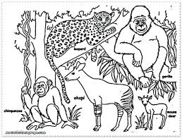 Rainforest Animals Coloring Pages Printable And Plants Amazon Explore Animal Jungle