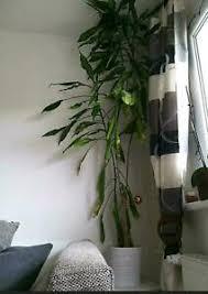 pflanze wohnzimmer garten möbel gebraucht kaufen ebay