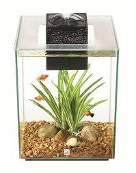 Spongebob Aquarium Decor Set by Best 25 Aquarium Set Ideas On Pinterest Plant Fish Tank