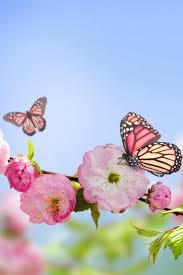 Butterfly Flower Mobile Wallpaper