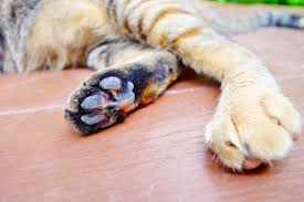 cost to declaw cat how much does it cost to declaw a cat cheaphowmuch