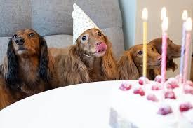 happy birthday hundekuchen zum selbermachen