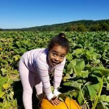 Pumpkin Picking Nj Near Staten Island by Melick Orchards 37 Photos U0026 26 Reviews Farmers Market 472