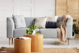 großstadtdschungel in natürlichen wohnzimmer mit kissen und beige decke auf grau und öffnen sie buch und pflanze im topf auf holztischen