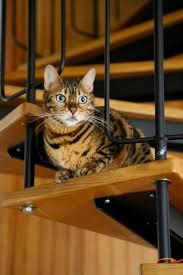faire le choix d un escalier en kit