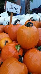 Pumpkin Patches Near Colorado Springs Co by Here Are 19 Great Missouri Pumpkin Patches