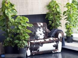 die efeutute ist die zimmerpflanze des monats februar