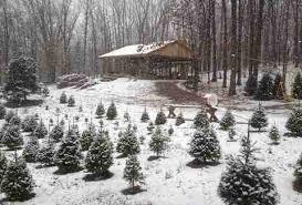 Nordmann Fir Christmas Tree Nj by Best Christmas Tree Farms Near New York City Ct And Nj Thrillist