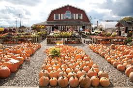 Local Pumpkin Farms In Nj by Take Your Pick Of U Pick Farms