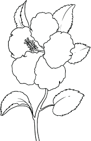 Flower Coloring Pages For Preschoolers Adults Sheets Pdf Printable Hibiscus Full Size