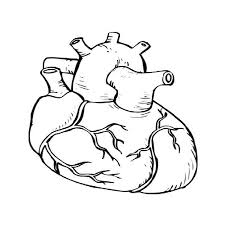 Heart Anatomy Colouring Pages Page 3